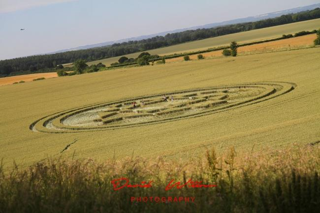 Danebury Hill crop circle. Image: David Willoughby