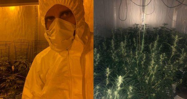 A number of cannabis plants were found at the property. Photo: Andover Police Twitter