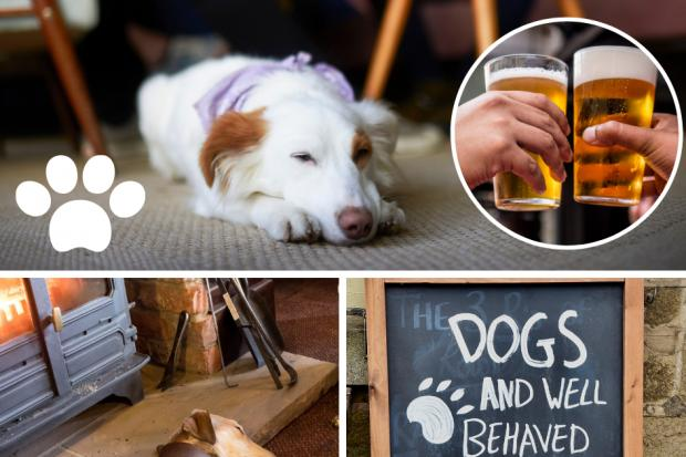 Dog-friendly pubs - pics. Getty