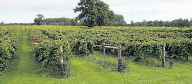 Wickham Vineyard.