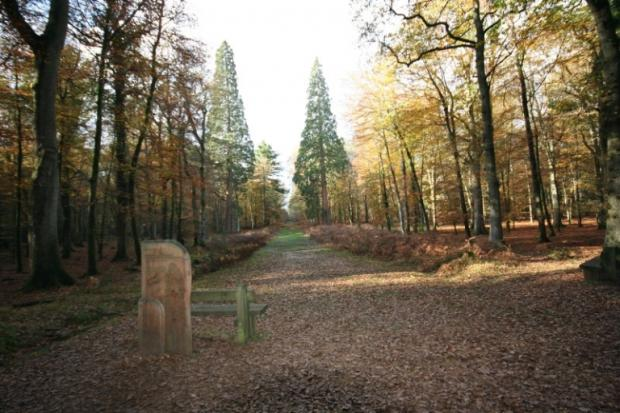 Call to help promote New Forest