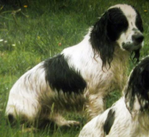 Trio arrested over theft of working dogs