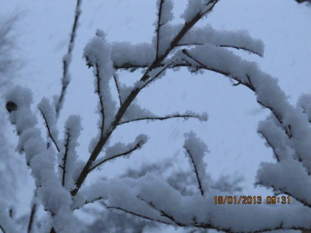 Julie Preston took this picture of the snow in Hedge End