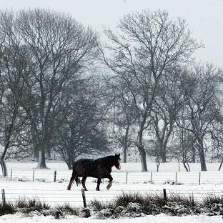 Labour warned 'several' horses slaughtered in the UK last year tested positive for a carcinogen