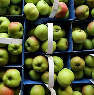 English apples are finally arriving on supermarket shelves after being delayed by the long cold spring and late arrival of summer