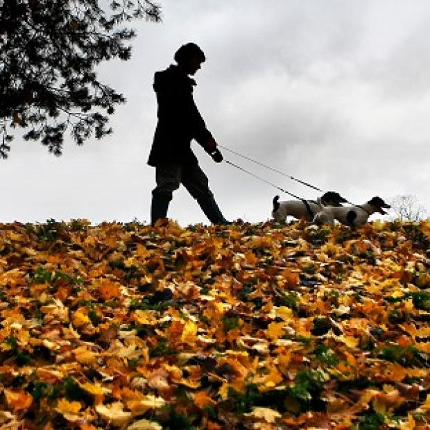 Andover Advertiser: Dog owners in the New Forest have been warned of the threat of disease after a number of pets died