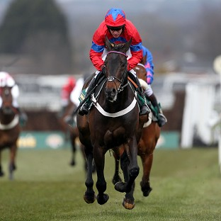 Sprinter Sacre will not run at Cheltenham