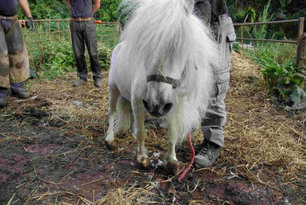 Neglected ponies left to suffer by brothers