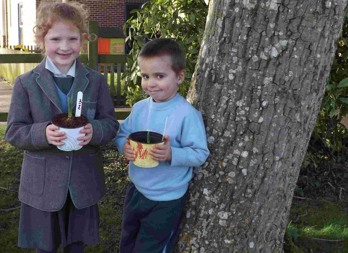 Pupils go potty for daffodils