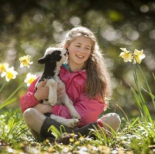 Andover Advertiser: Verity Sharpe, 13, with Terence the lamb at the National Trust's Arlington Court property in Devon. (Steven Haywood/National Trust/PA)