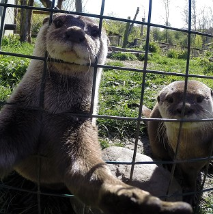 Musa the otter joins selfies craze