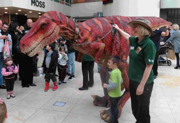 On May 3, the prehistoric giant will be on show at the Swan Centre at 11.30am, 12.30pm and 2pm.