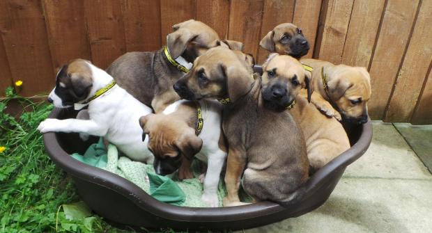Dog's Trust supports team of world 'pups'