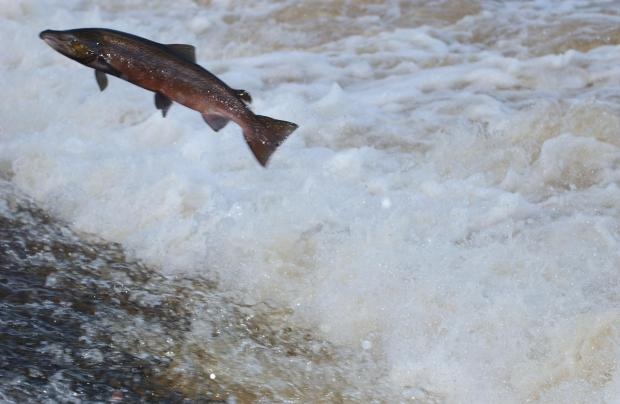Noise could prove an obstacle to salmon returning to the Test and other rivers in Hampshire
