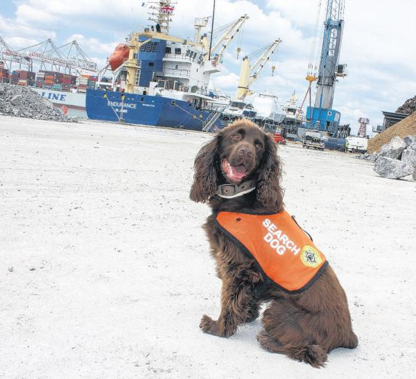 Bentley the dog regularly visits the docks with owner Nick Wright