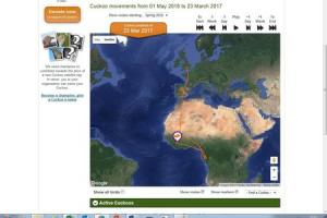Tracking the migration of the cuckoo