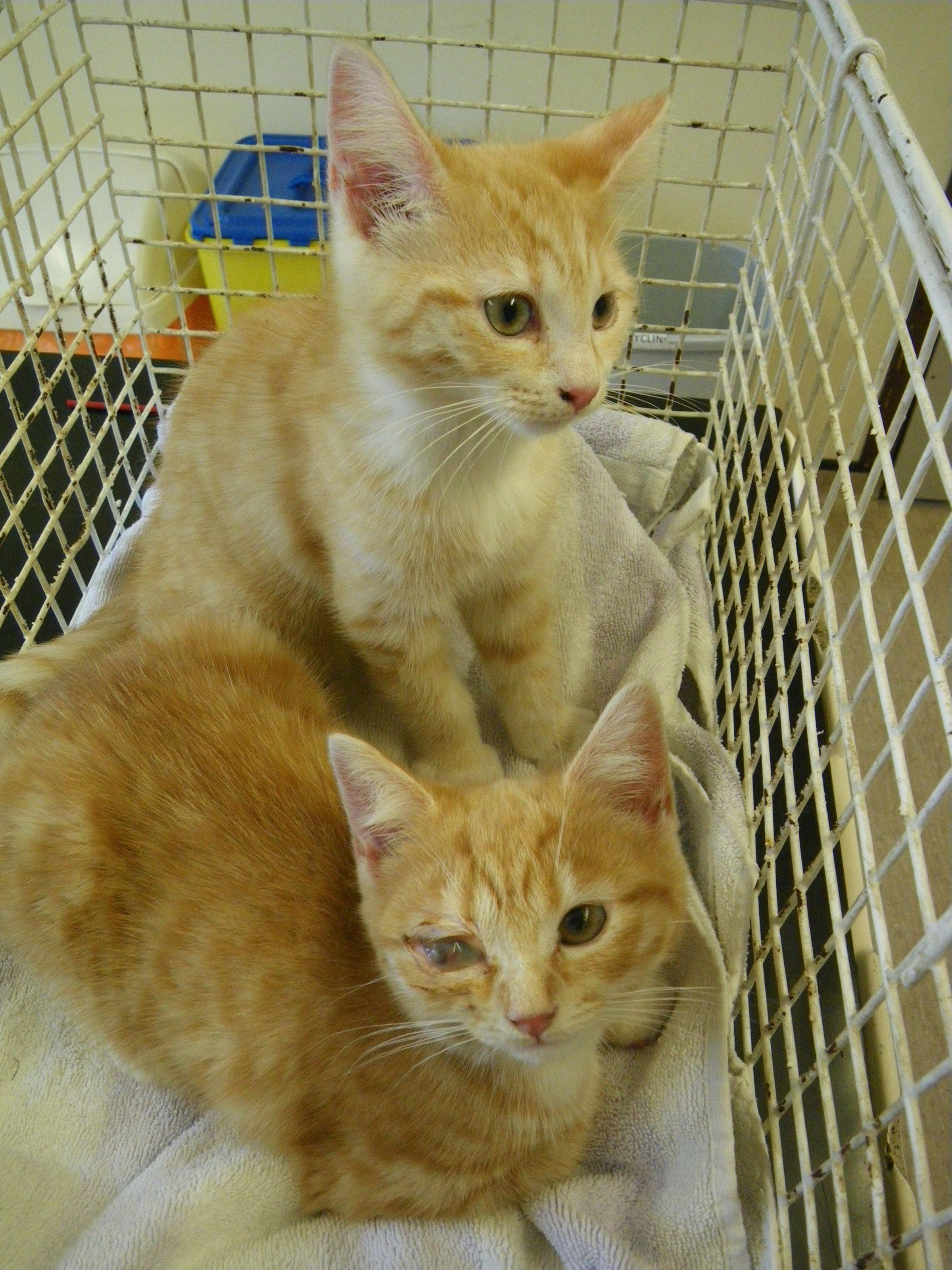 Kittens which were dumped in New Milton